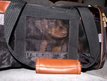 Jake enclosed in carrier